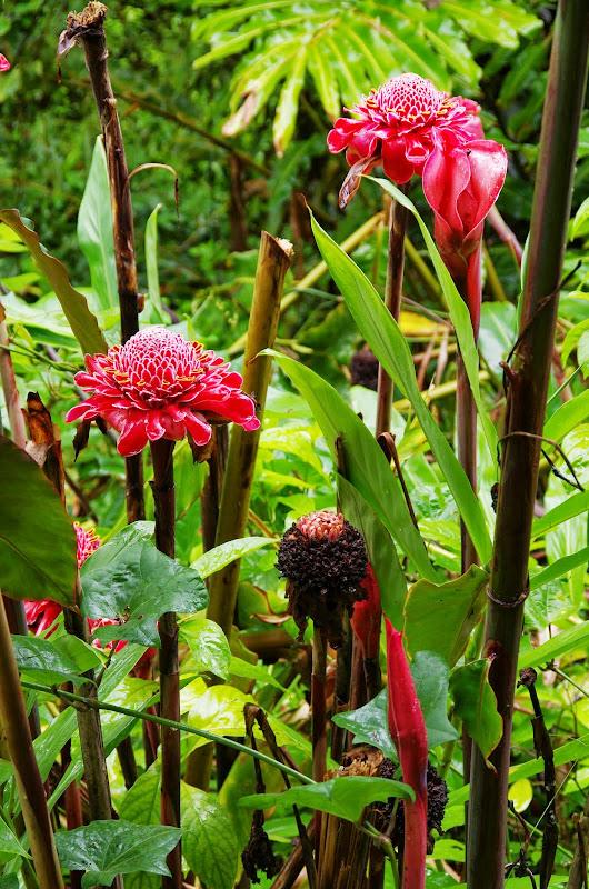 06-23-13 Big Island Waterfalls, Travel to Kauai - IMGP8832.JPG
