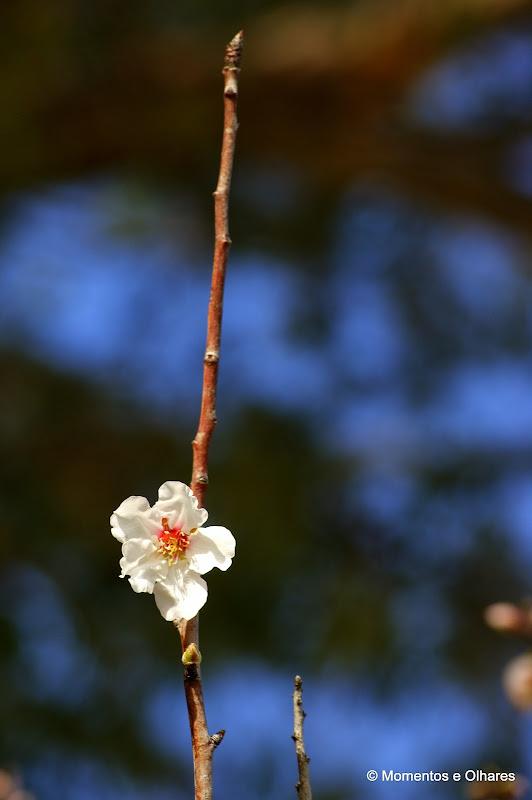 Bem vinda Primavera