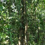 La forêt à Tunda Loma (Calderon, San Lorenzo, Esmeraldas), 28 novembre 2013. Photo : J.-M. Gayman