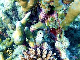 family trip pulau harapan, 1-2 agustus 2015 gopro 45