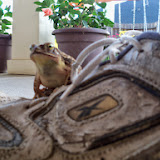 Gardening 2014 - 116_3014.JPG