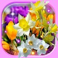 Spring Irises and Narcissus Flowers Live Wallpaper icon