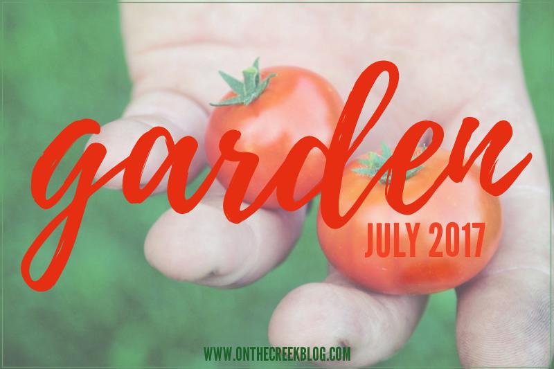 garden + tomatoes + squash
