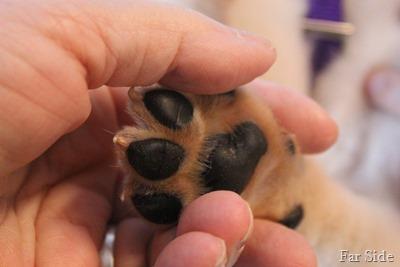 Deacons paws