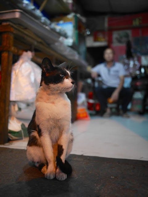 cat sitting inside a shop in Changsha, Hunan, China