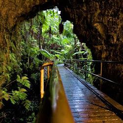 Kaumana Caves Co Park's profile photo