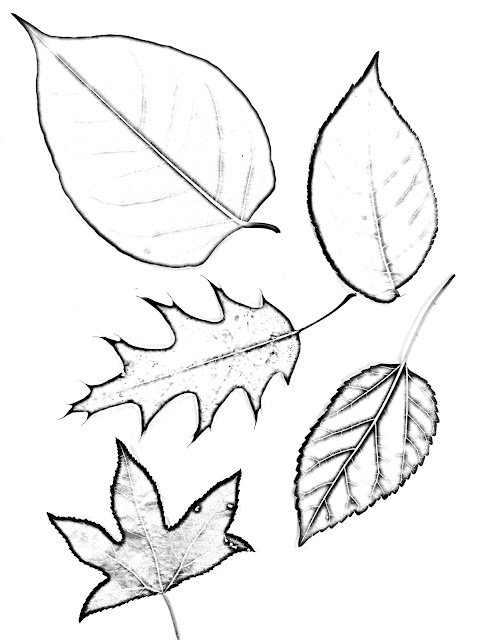 Drawing magnified leaves finding the details
