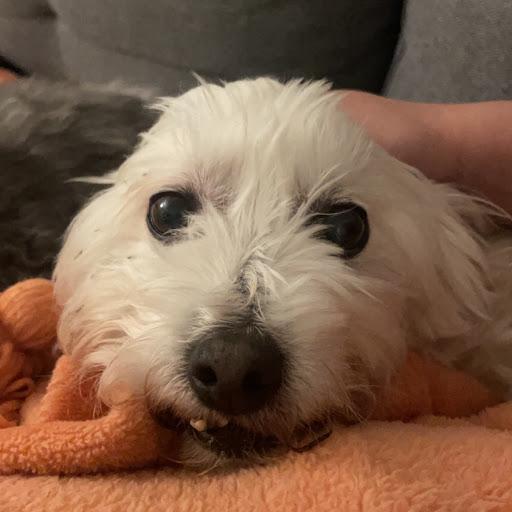 Carol Navarro
