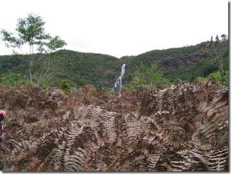 aiuruoca-trilha-cachoeira-do-fundo-campos-samambaias-2