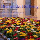Primelaktion - Blumen der Hoffnung