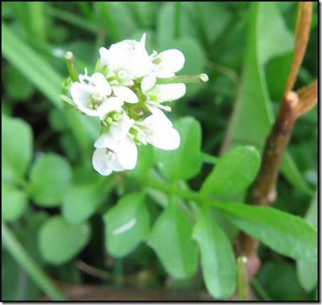 0302flower1