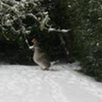 tn_lachaux-2010-12-15.jpg