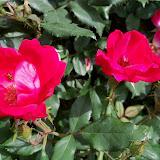 Gardening 2011 - 100_7628.JPG