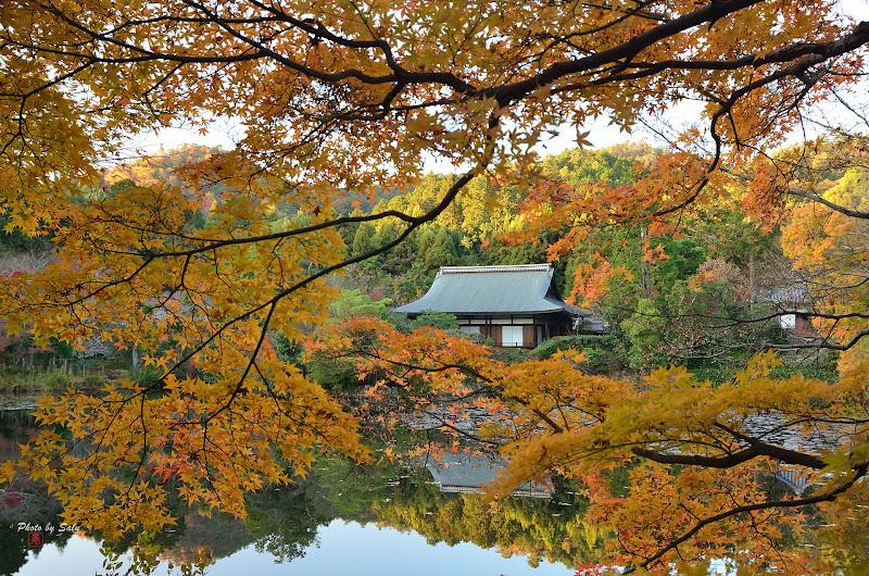 龍安寺 楓 鏡容池