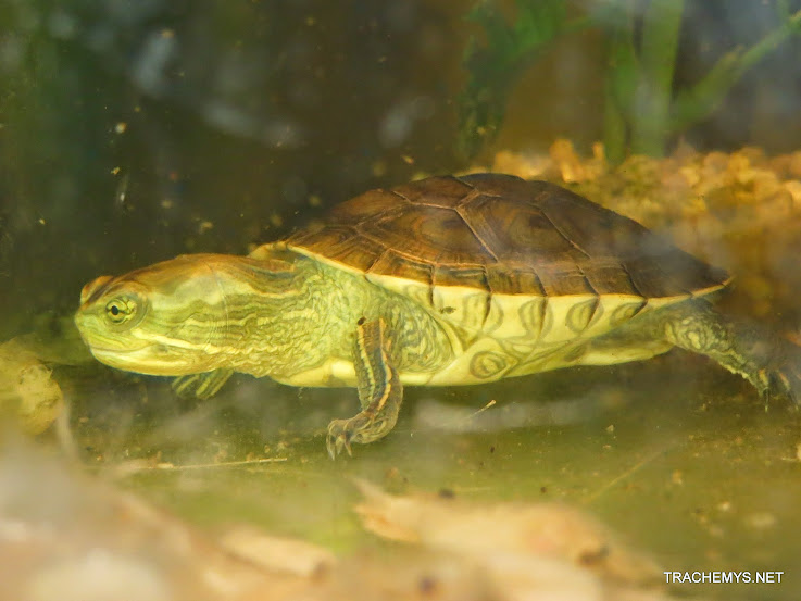 mes tortues (BK) - Page 13 IMG_5151