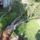 Hurricane Ike - 101_0167.JPG
