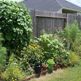 Gardening 2010, Part Three - 101_4846.JPG