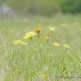 2013 Spring Flora & Fauna - IMGP6378.JPG