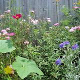 Gardening 2010, Part Three - 101_4833.JPG