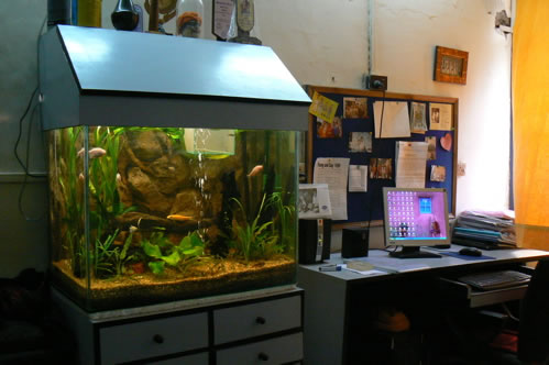 Humsafar drop-in center office. Aquariums are very popular decorations in India.