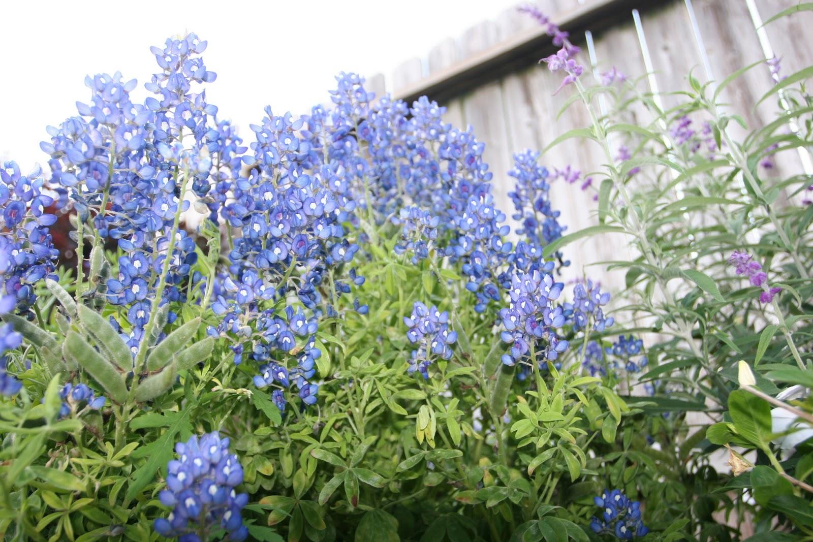 Gardening 2012 - IMG_2708.JPG