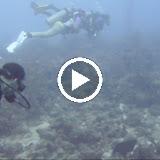 Bonaire 2011 - wsDOumFrxGPPiJ8hoIl7QS4-45iPdvq2aNLSC1oUPLasGkg9l_zZrr5ZdsABGH712CAAo9mW8g=m18