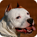 Pitbull Dog Pack 3 Wallpaper icon