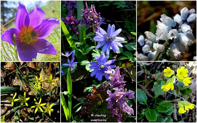 flori-aprilie-rw.jpg