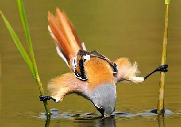 Pájaro sujetándose por dos ramas