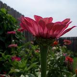 Gardening 2011 - 100_8645.JPG