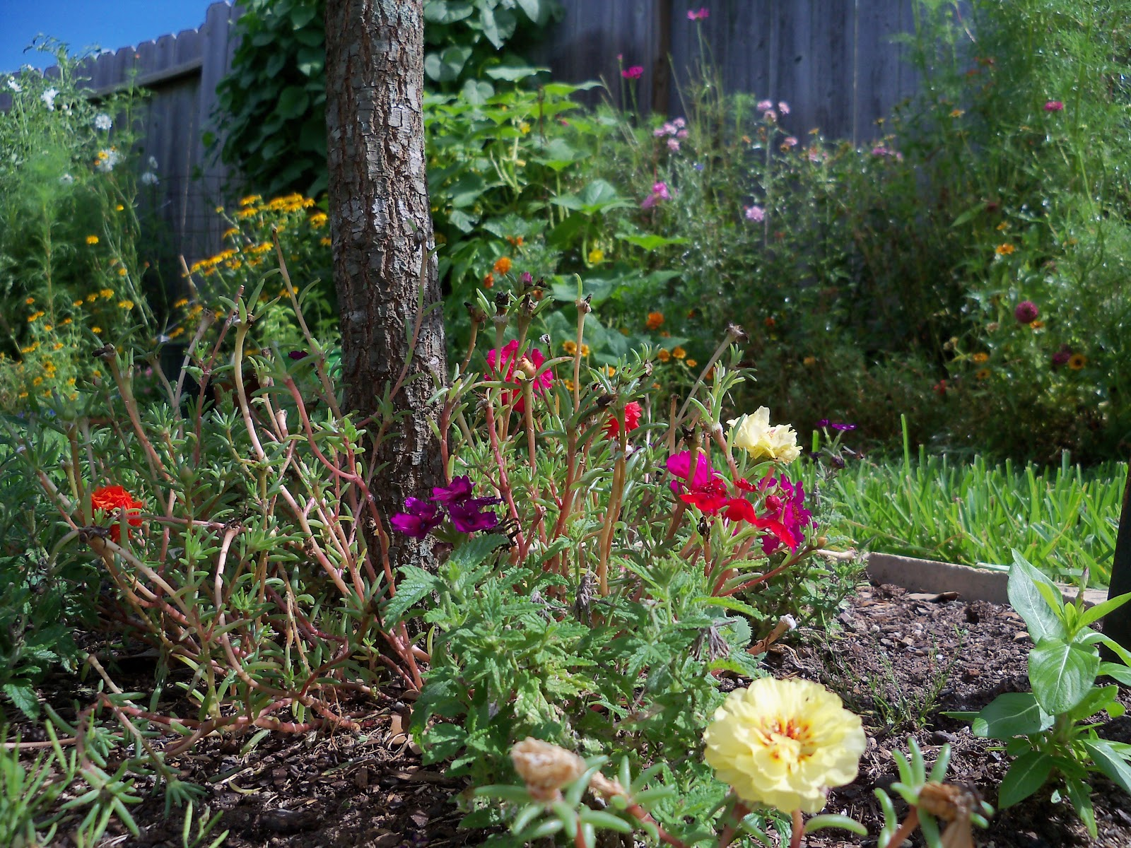 Gardening 2010, Part Three - 101_5054.JPG