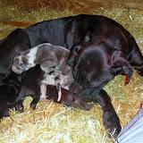 Gigi's puppies @ 3 weeks