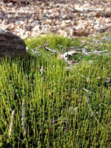 Very little sign of spring in the woods as far as flora. This patch of moss sticking out.