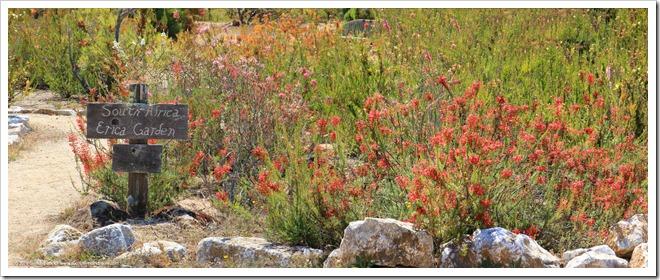 160813_UCSC_Arboretum_EricaGardenPano
