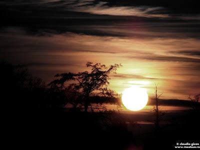 copacii goi ai toamnei in apus de soare
