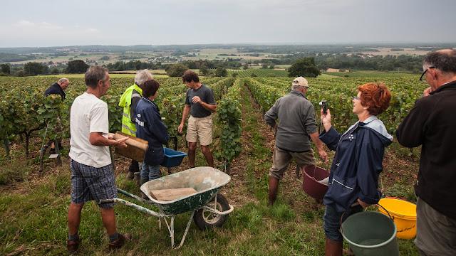 2013 vendanges du chardonnay - 2013%2B09%2B28%2BGuimbelot%2Bvendanges%2Bdu%2BChardonnay%2B106.jpg