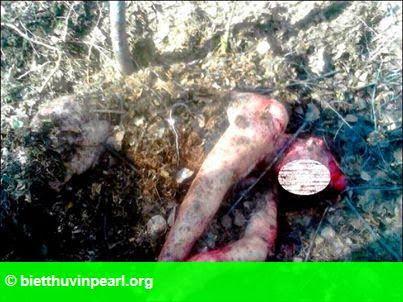 Hình 2: Một người phụ nữ bị gấu tấn công và chôn sống