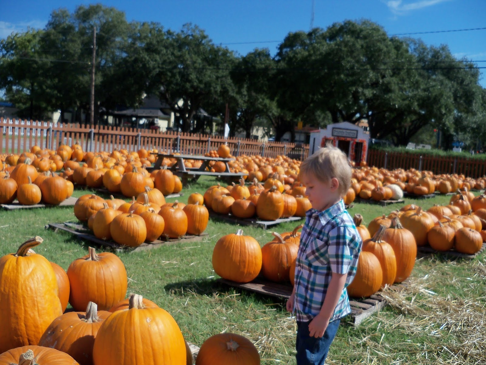Pumpkin Patch 2015 - 100_0396.JPG