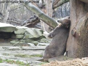 Photo: Jetzt muss sich Knut erst einmal wohlig schubbern :-)