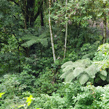 Piste vers Mount Totumas, 1650 m (Chiriquí, Panamá), 26 octobre 2014. Photo : J.-M. Gayman