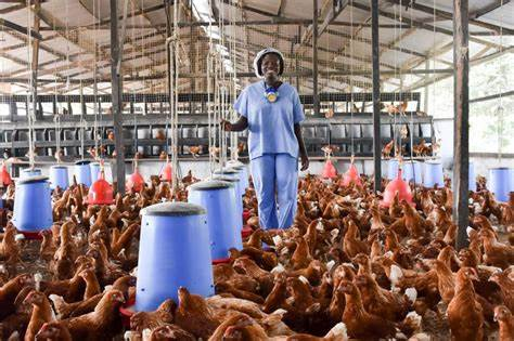 Poultry sector enjoys $2m from United States Department of Agriculture