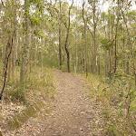 Red track on Mt Sugarloaf near Newcastle (324290)