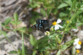 Butterfly pollinating a flower