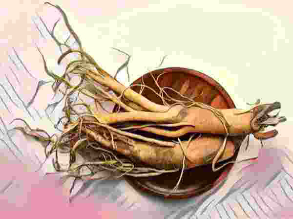 Khasiat Berbagai Jenis Ginseng Korea