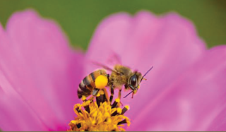 bee collect pollen