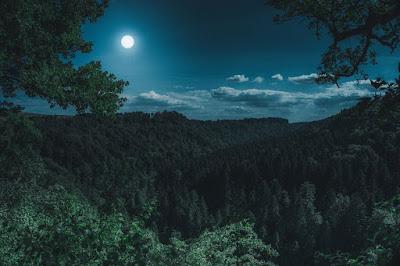 ब्लैक फॉरेस्ट या काला वन, जर्मनी - anokhagyan.in