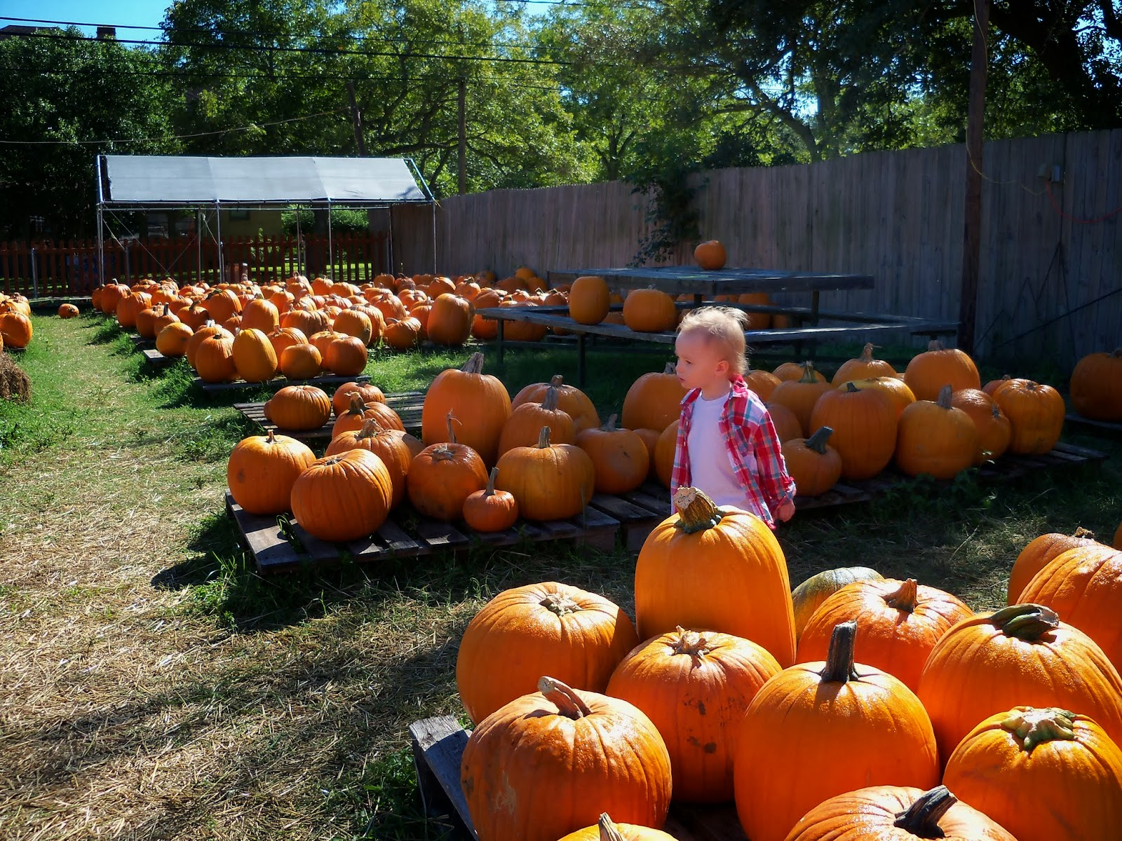 Pumpkin Patch - 115_8231.JPG