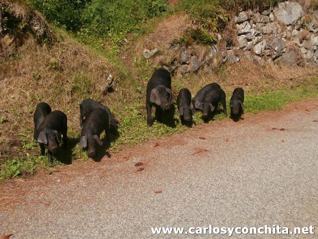 Camino de Mijanés, origen de la excursión