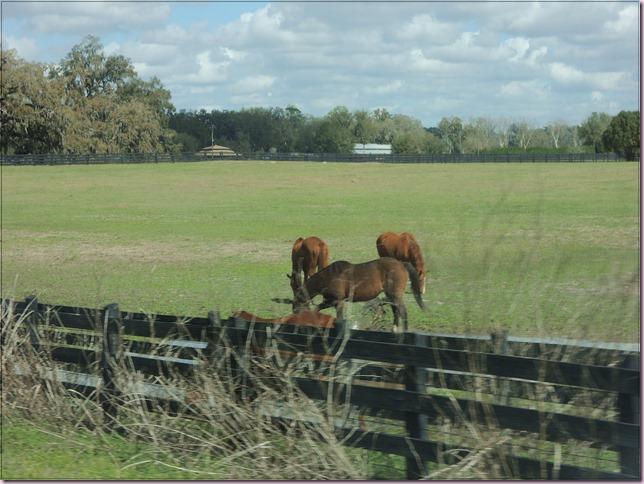 horsesDSCN4716