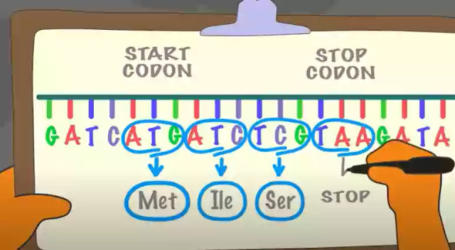 Substitution mutation